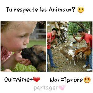 Statut facebook d'un faux sondage sur le respect envers les animaux
